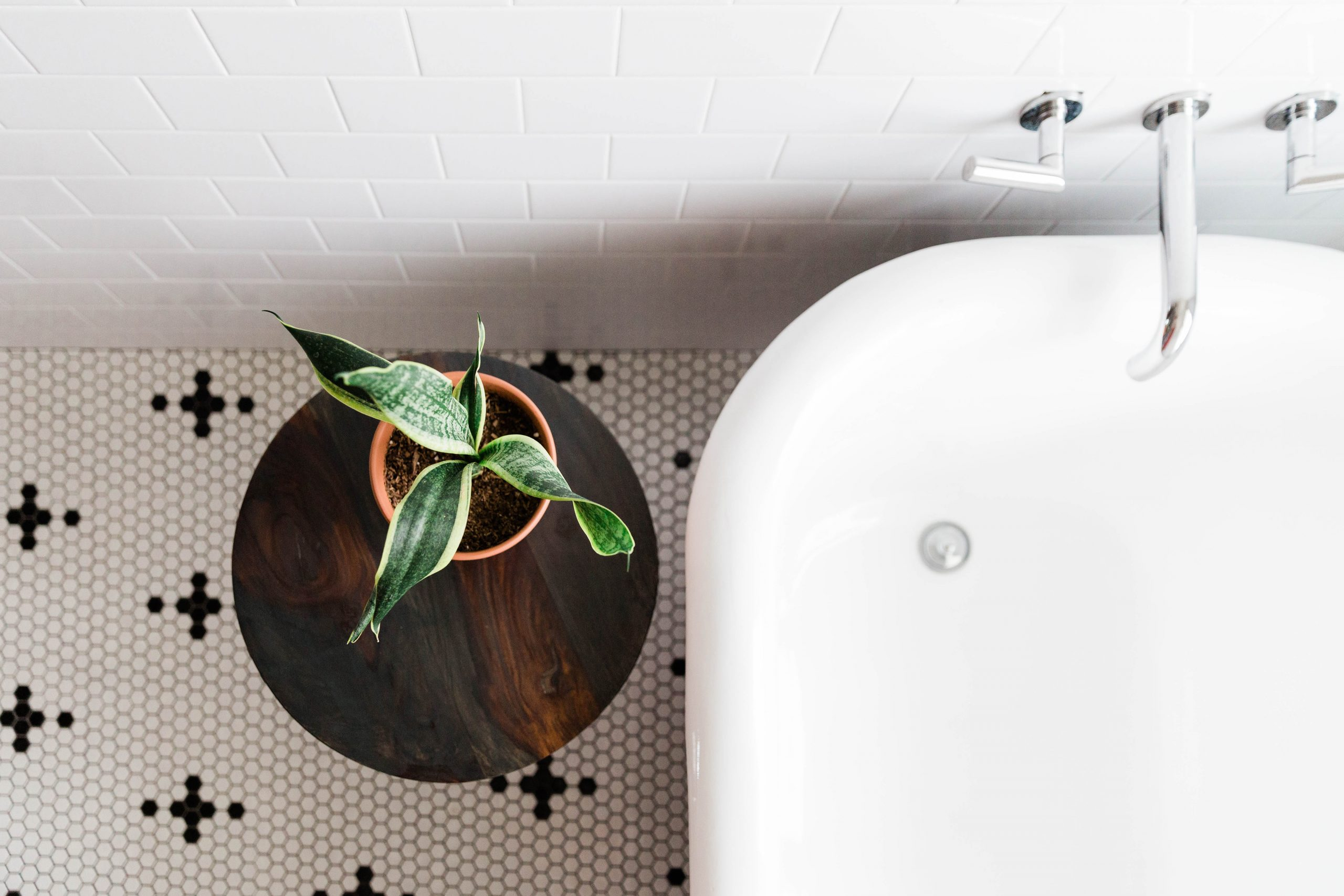 vintage bathroom with plant and claw foot tub